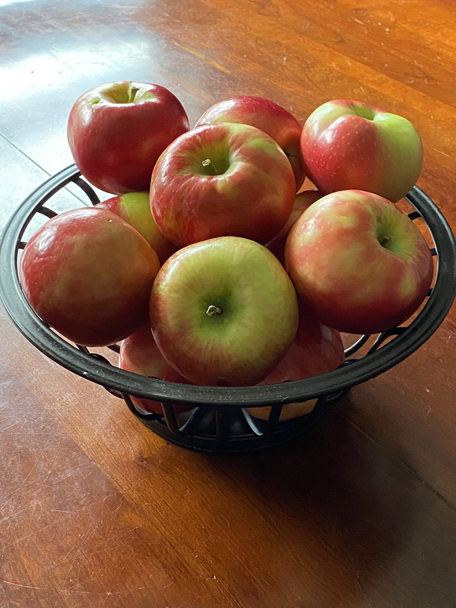 It must be Fall.  Check out these HoneyCrisp apples! 🍎   #honeycrispapple #honeycrisp #appleseason #apple #newenglandapple https://t.co/bfjsx2ypah