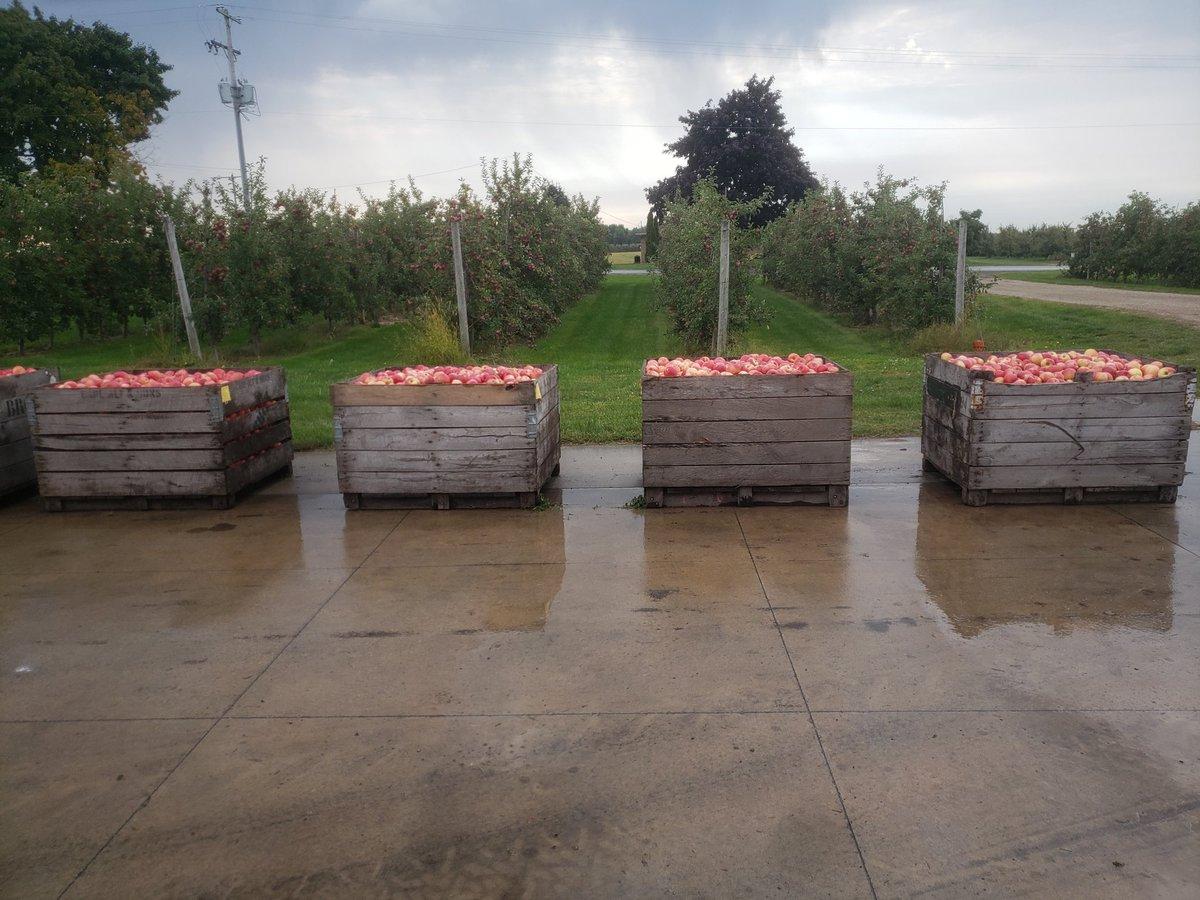 """Sweet"" office view this morning on Fruit Ridge #honeycrisp #apples https://t.co/QG7qwaatly"