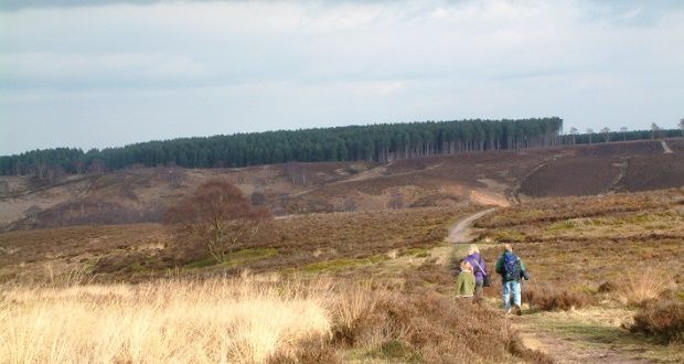 By 2026 Cannock Chase will have 3,000,000 visitors a year. Read how open public access will be balanced with protecting a vulnerable landscape and wildlife https://t.co/ywedMqNqMI https://t.co/rr5YGB0xs9