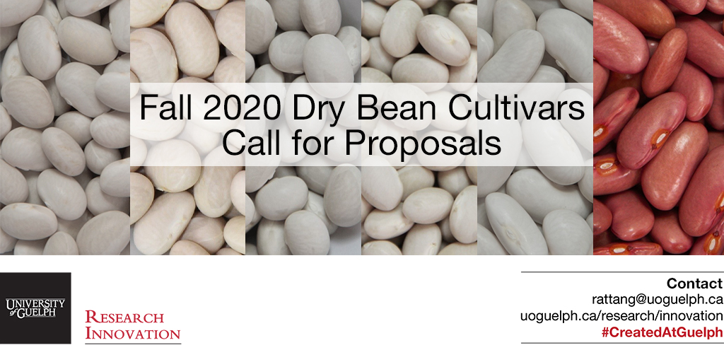 @UoGDryBean has released six new varieties of dry beans (2 kidney and 4 navy beans)! #agrifood #plantag  These are great new #CreatedAtGuelph #licensingopportunities ⤵️ https://t.co/anu9h1UiKe https://t.co/J8rGkqwWhn