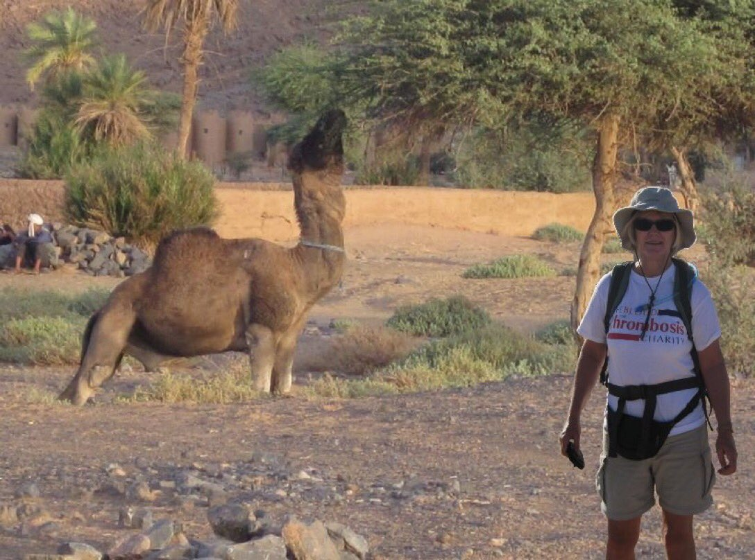 Stumpy's back again! Did this camel eat our tent? Or fall on it in the night? Answer in Trekker Girl Morocco Bound. Buy it, chuckle at my desert antics, laugh and cry with me and my bloodclot story & support @ThrombosisUK as royalties go to this charity. https://t.co/wm60Io7ZtG https://t.co/EdKYsESxc5