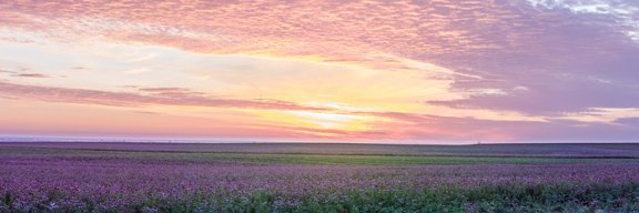 Fresh from the field. These photos were taken yesterday. The sky complemented the Echinacea purpurea perfectly as our harvest operators at Trout Lake Farm East were up before dawn. Working hard to get Nutrilite brand products to you. #organic #farming #Amway https://t.co/DqJB8ViWQq