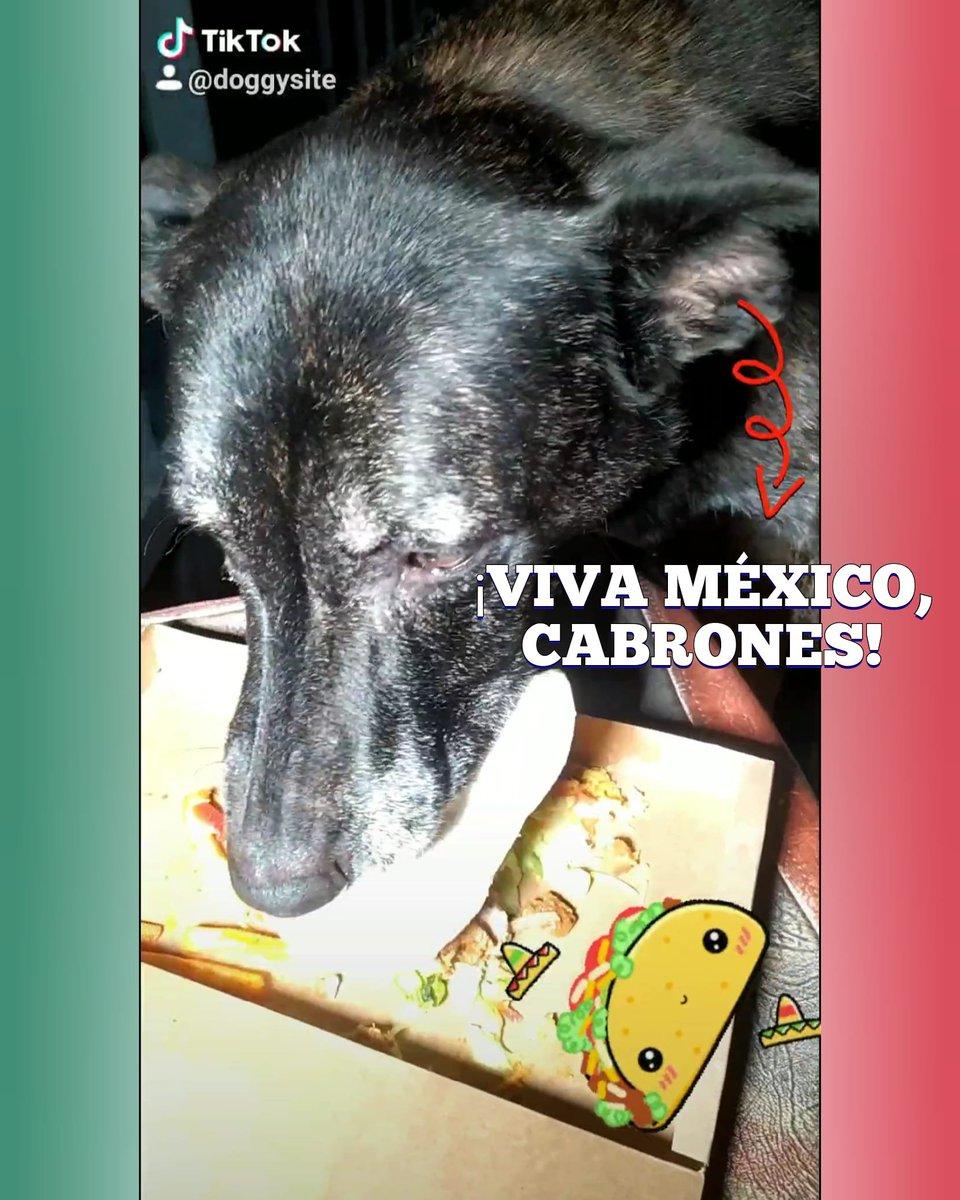 No te pierdas la noche #texmex de doggysite en #tiktok     #FelizMartes #otono #COVID19 #Otono2020 #Covid_19 #dogsofinstagram #dogoftwitter #tiktoker #ATENCION #irresponsableenredeses #YoMeQuedoEnCasa #Mexico #VivaMexico