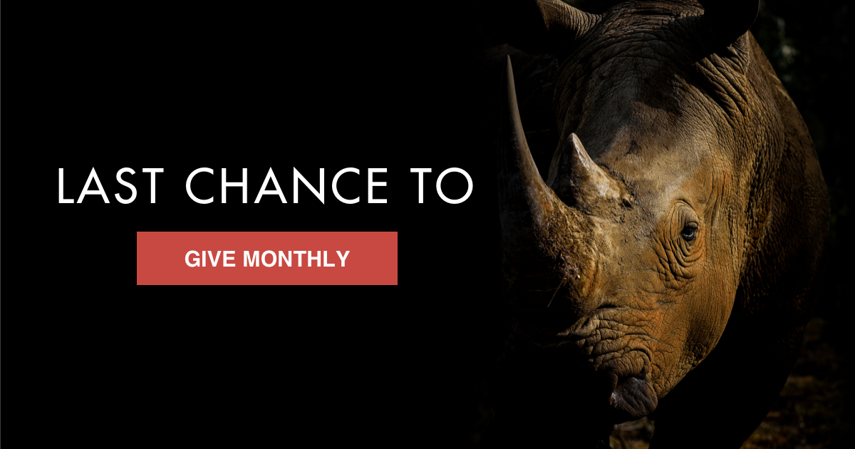 Want to make a rhino's day ON #WorldRhinoDay? Lead the charge to protect them! Join us as a monthly donor today, and your first gift will be doubled — but only till midnight. Tell poachers you're staying in the fight for rhino survival today & every day! https://t.co/G6oeIHXfUS https://t.co/4Rga9azQhJ
