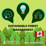 Image for the Tweet beginning: #NationalForestWeek #DYK forests can play