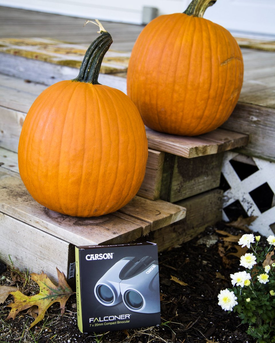 Happy First Day of Fall Y'all! We spy a falconer 👀 Carson's FR-720 Falconer™ binocular provides spectacular images & fantastic sharp resolution https://t.co/QElBDHkfEh #fall2020 #firstdayoffall #binoculars #naturehike #hikingadventures  #birdwatching #camping #roadtrip https://t.co/9aHWAud1MG