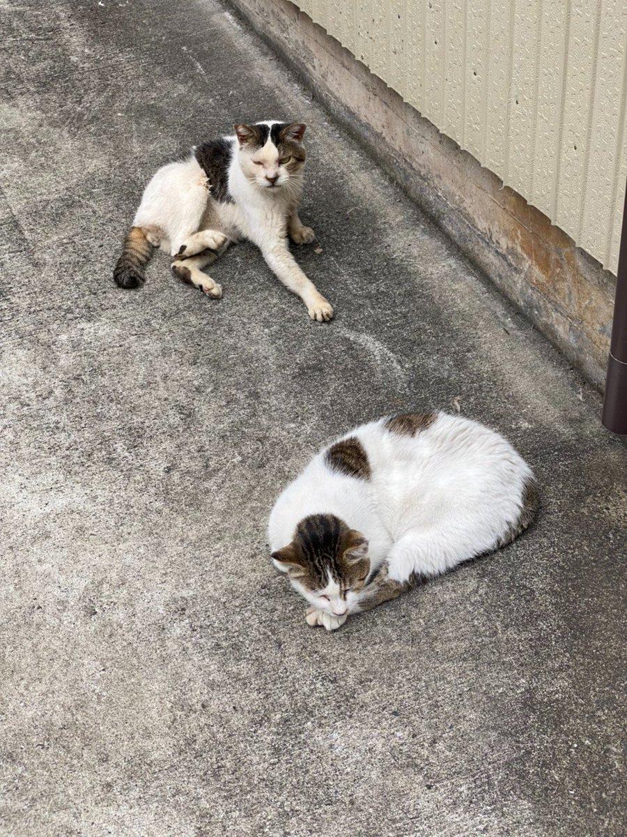 道のわきで寛いでた猫 後ろはめっちゃ警戒してたけど 手前のは終始こっちに無関心だった(笑) #猫 #野良猫 #猫好きさんと繋がりたい https://t.co/9qwOuEZKtX