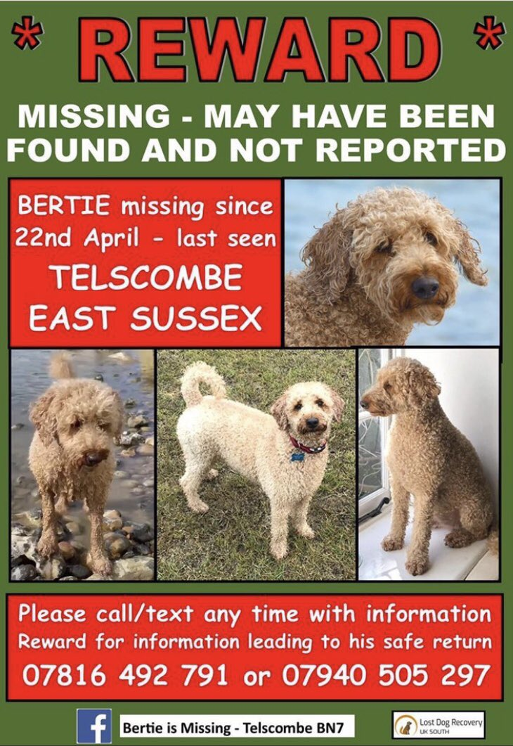 #LOST #DOG📌 PLEASE keep lookout for @bertie_is BERTIE who has been #MISSING since April 22 2020 from #Telscombe #Rottingdean #UK Devoted Mum and Dad are doing absolutely everything they can to find him❤️ PLEASE SHARE/RT✔️ #pawcircle #weeti #HELP #dogs #REWARD #FindBertie https://t.co/Ex7wvUwJ4M