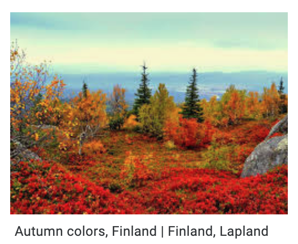 Fall colors, Lapland, Finland. https://t.co/wD1A66y9ky