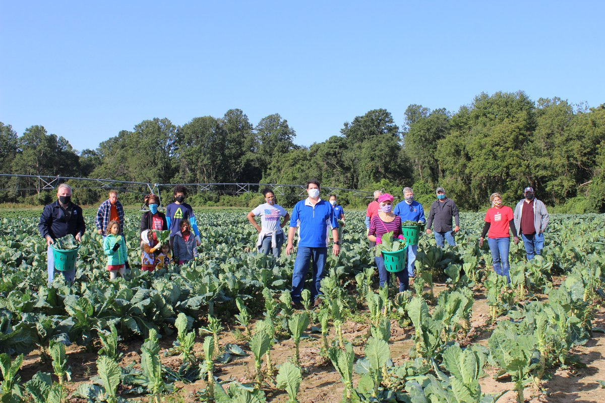 As part of the annual Day to Serve initiative, MDA staff and food bank volunteers gleaned 2,000+ pounds of collards today at Bartenfelder Farms for the @MDFoodBank's Farm to Food Bank Program.   These collards will go on to feed Marylanders in need & help fight hunger! #MDDTS2020 https://t.co/2RKoD7341x