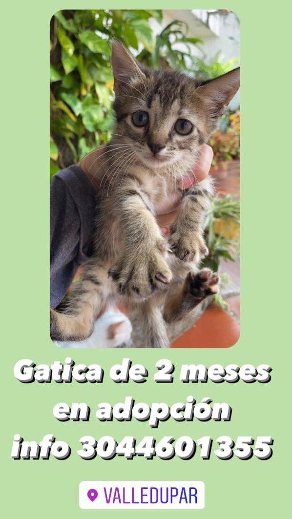 Oigan, adoptar un gato es la mejor decisión que pueden tomar en su vida. LO JURO.  Adopten a esta bebe https://t.co/3IIyqP38jd