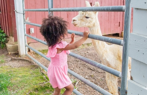 8 great farm stays for families—all appropriate for a socially distanced getaway: https://t.co/GsnAXjTXdJ #FarmLife https://t.co/jxvSi8Lety