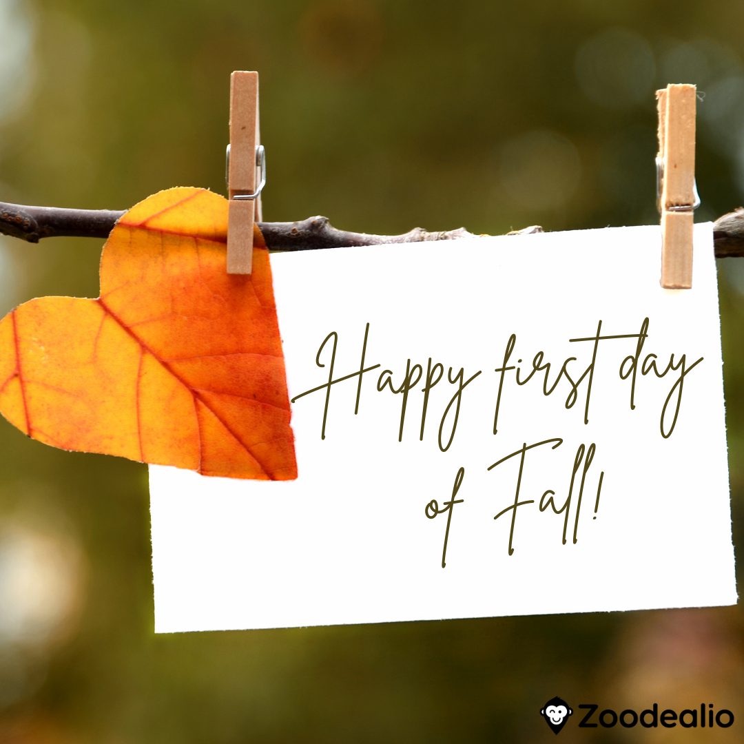 Happy First Day of Fall!   #realestatesoftware #ibuyer #ibuyeroffer #realestatemarketplace #zillow #opendoor #openhouse #realestatebroker #realestateteam #lightersideofrealestate #realestateforsale #realestateagent #realestateagentlife #justsold #justlisted #realestatetips #atla https://t.co/YLEeUnt4xE