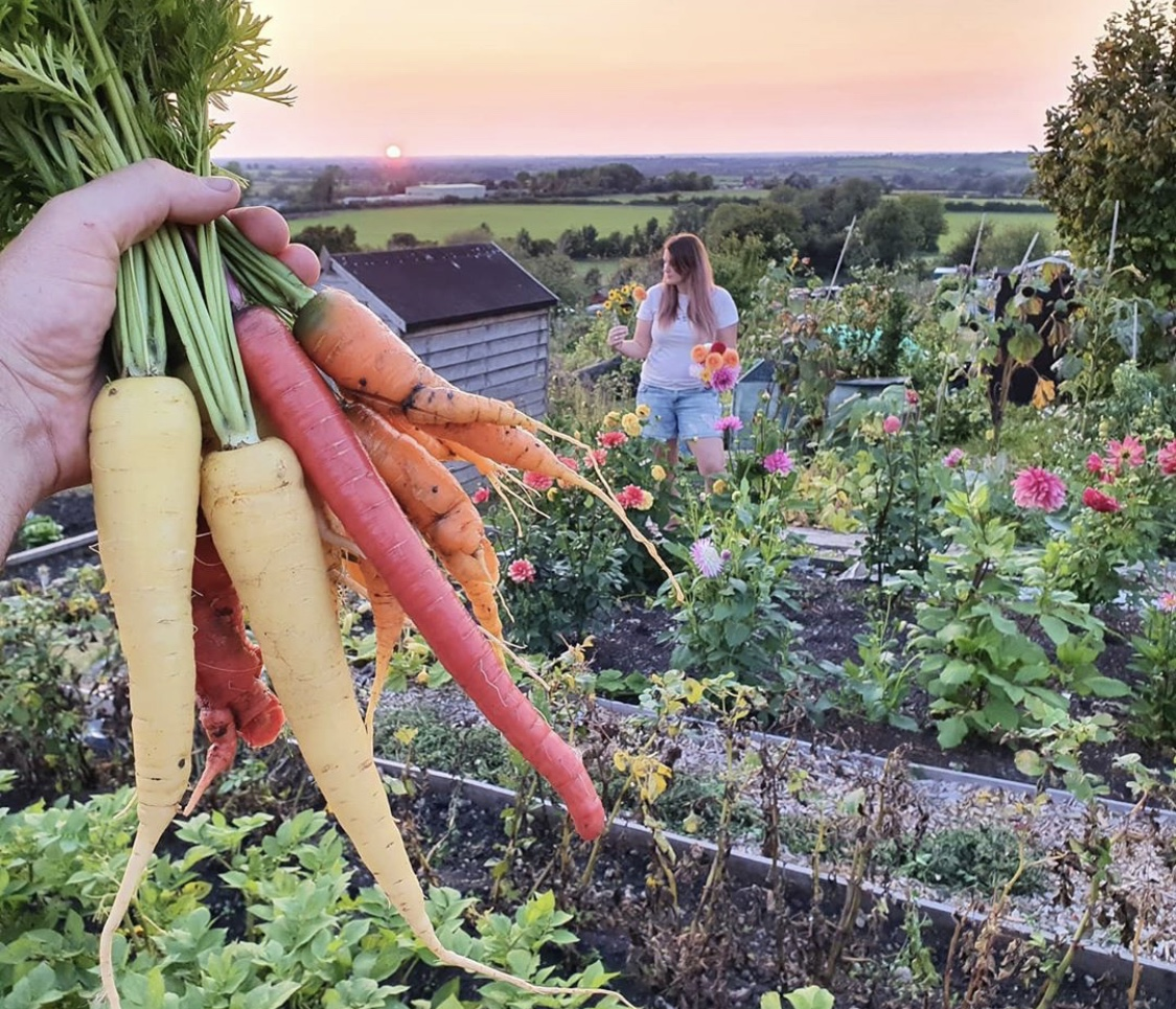 When your carrots match the sunset! 😍 🥕 - Beautiful photo from @ukallotmenteers https://t.co/LP5t9g9b8Z https://t.co/6Uq6D79U8v