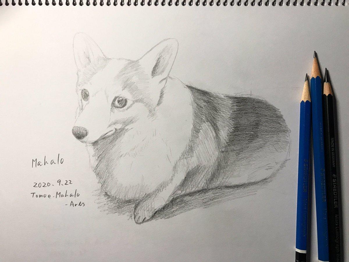 #mahalo #welshcorgi #dog #corgi #welshcorgipembroke #illustration #drawing #art #artwork #picture #sketch #staedtler #pencil_art #pencil #ウェルシュコーギーペンブローク #コーギー #デッサン #デッサン画 #mahalo https://t.co/HKbQ43JffU