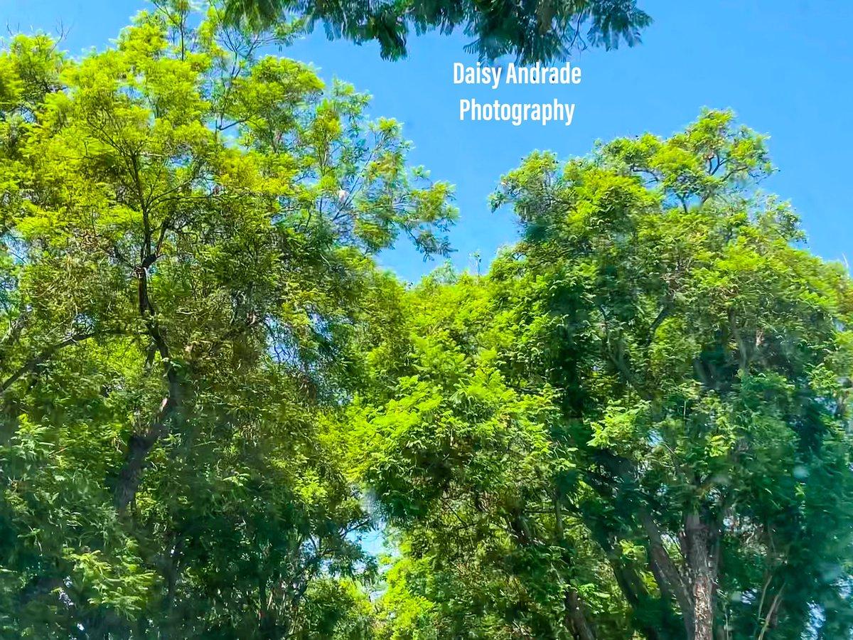 #daisyandradephotography #city #shadows #photographylovers #instapic #photo #photographylife #travelphotography #colorful #California #outdooradventure #trendy #abc7eyewitness #abc7community #vistala #naturephotography #photographyeveryday #newsphotographer https://t.co/uZdXzvuuUy
