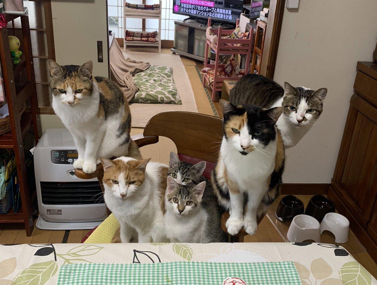 全のせ猫マシマシ。