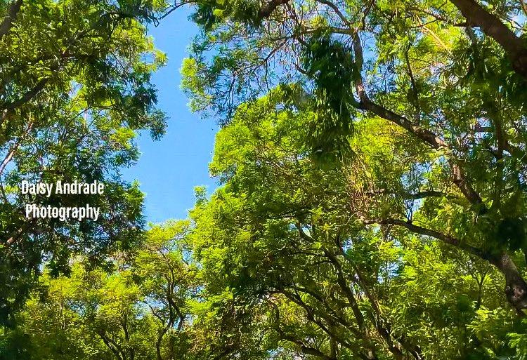 #daisyandradephotography #city #shadows #photographylovers #instapic #photo #photographylife #travelphotography #California #outdooradventure #trendy #abc7eyewitness #abc7community #vistala #naturephotography #photographyeveryday #newsphotographer https://t.co/tXiR9PnSWO