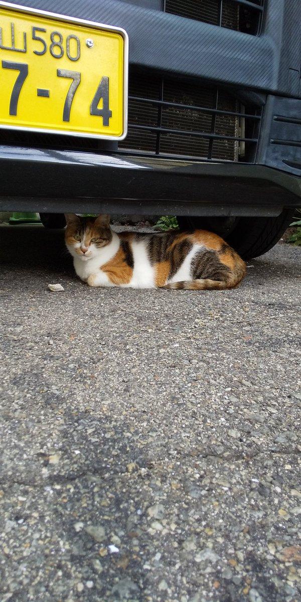 いつもの野良猫さん。  #野良猫 #のらねこ #三原市 https://t.co/ruLJO9JwVP