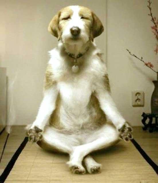 悟りを開きそうな犬と猫……!自然の中で修行する「瞑想する犬」と「弟子の猫」のフィギュアがかわいい  @meetissai さんより