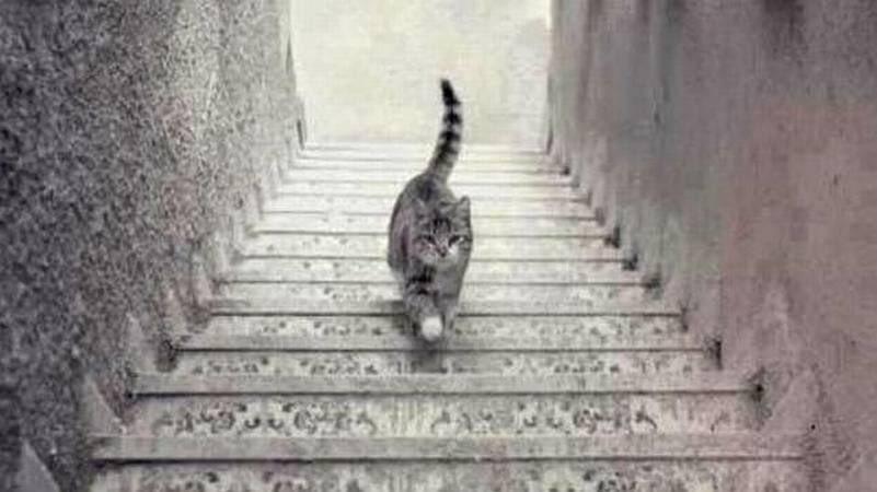 Para ustedes, ¿el gato está subiendo o bajando las escaleras? https://t.co/TGiDfIawu7