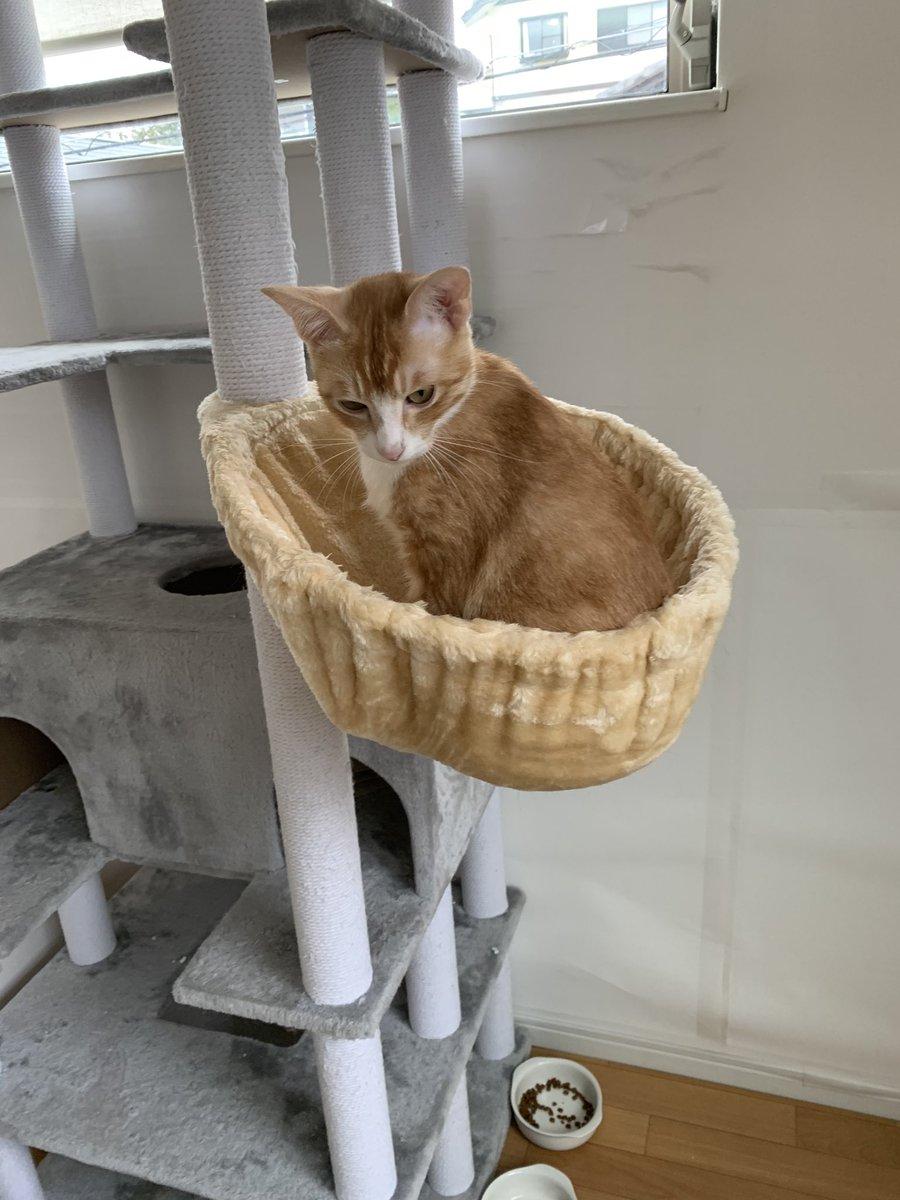 ハンモックと同化しとる。  #にゃんすたぐらむ #ねこすたぐらむ #保護猫 #ちゃとら #ハチワレ #猫好きさんと繋がりたい #野良猫  #はんもっく https://t.co/cC55JJDSWF