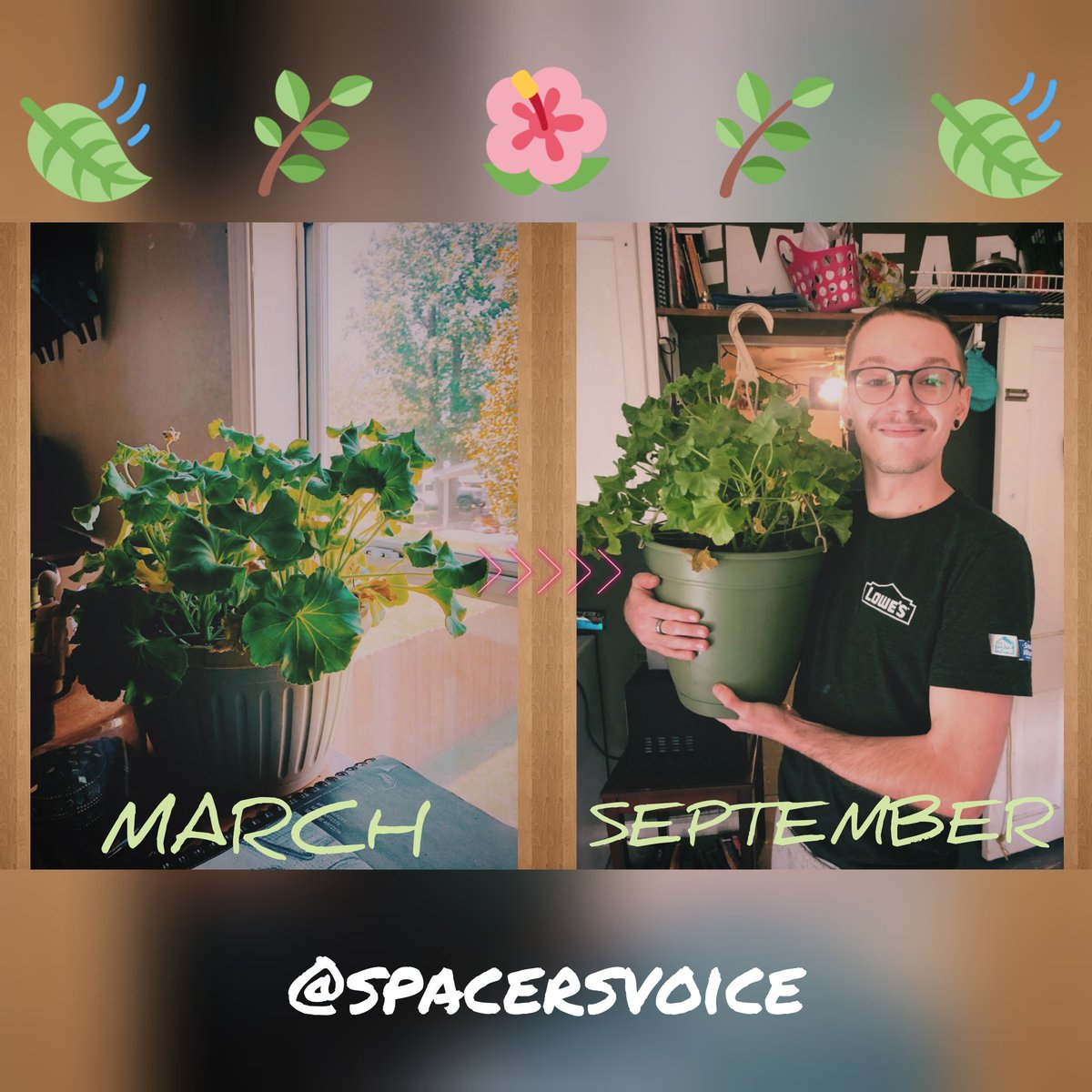 Check out this tweet from spacersvoice: Lockdown was easy, I had a beauty to grow 🤘  #plants #geranium #gardening #garden #tlc #proud #happy #baby https://t.co/LbQUJLimmk