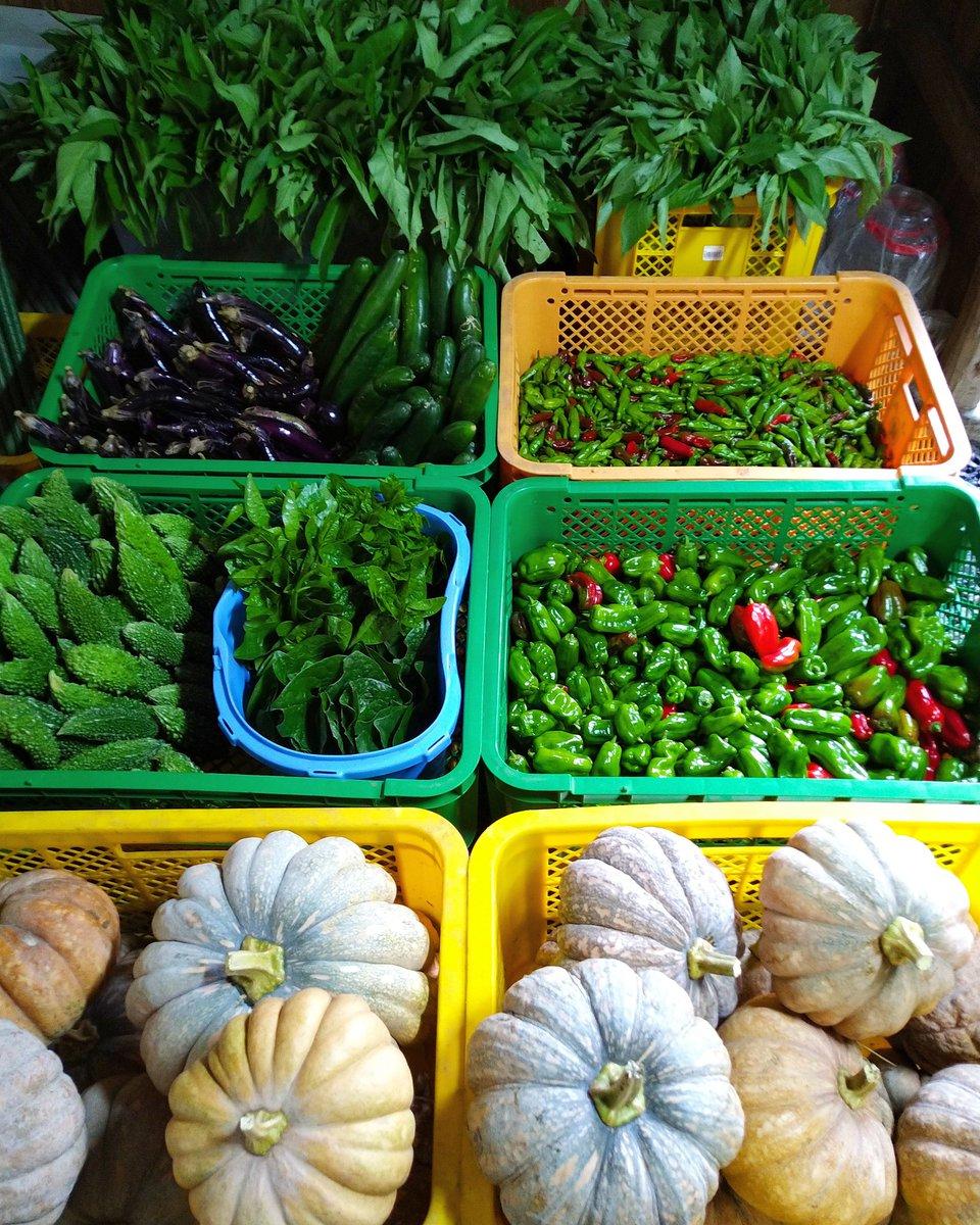 今週の自然農お野菜セット用お野菜収穫&発送作業完了です。(今年37回目)🐨  #産直野菜 #無農薬栽培 #野菜発送 #自然農 #野菜収穫 #免疫力up  #naturalfarming #organicvegetable  #notillfarming #lifeisbeautiful  #lowtech https://t.co/WrDeOTOzXX