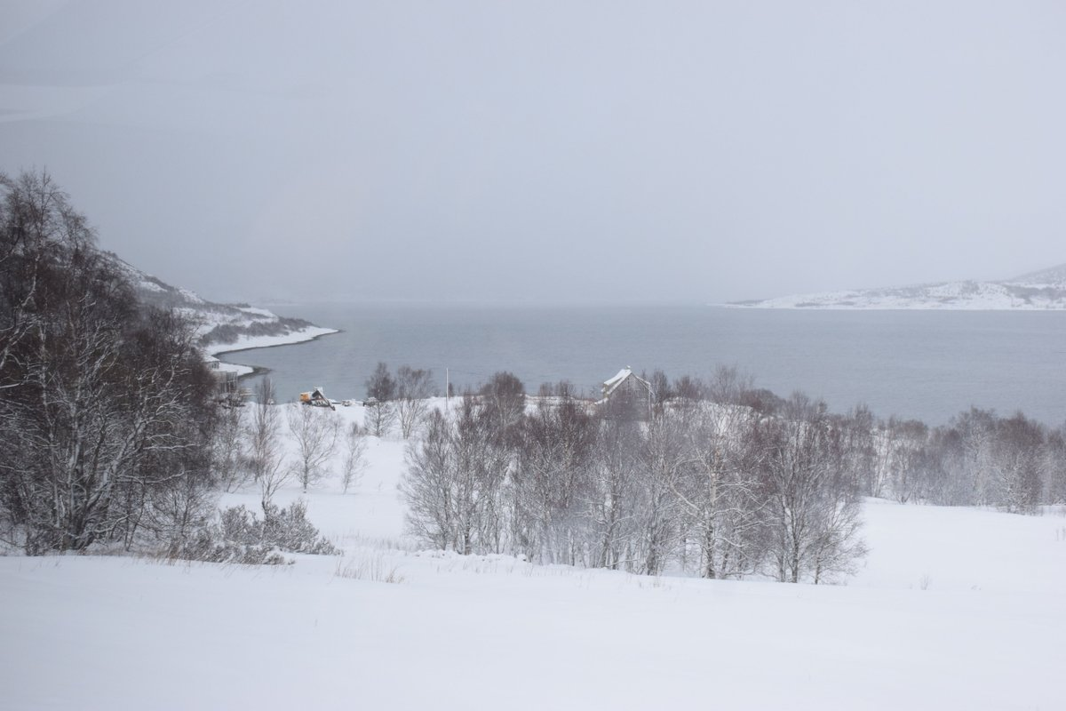 Far across the deep sea, in the midst of silent white snow, empty trees all around surrounding but free, Here I am feeling at peace! :)  #Snow #sea #noleaves #lofoten #lofotenislands #norway #winters #winterdestination #travel #travelphotography #photography #nature #travelgram # https://t.co/KdEzk14fN1