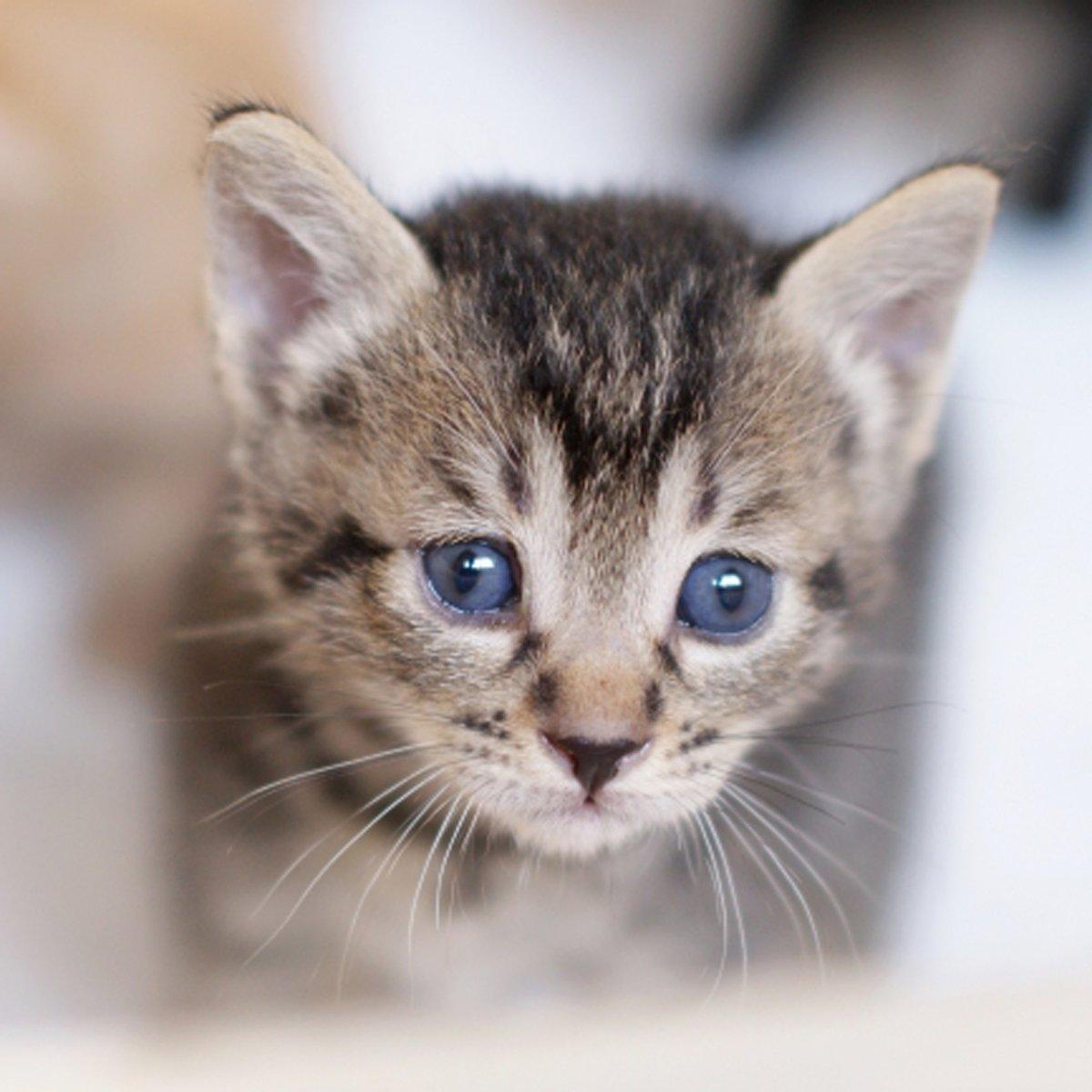 かわいいにゃんこ♪ #ハニーペット #HONEYPET #honeypet #猫 #ねこ #ねこ部 #にゃんすたぐらむ #にゃんこ #子猫 #ネコ #ねこのいる生活 #ねこのきもち #ねこのいる暮らし #kitty #catstagram #petstagram #instacat #meow #instagood #follow #followme https://t.co/HfYgeqcV0D