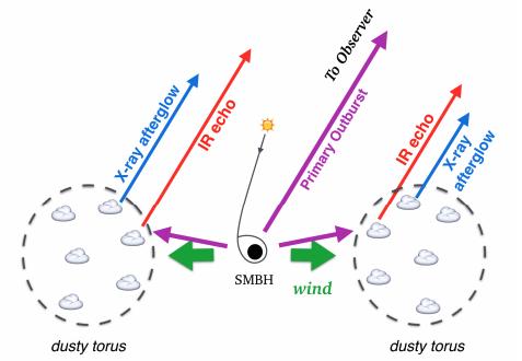 #キャルちゃんのarXiv読みTDEsにおけるウィンドとダスティトーラス相互作用を解析と数値実験により調べた。TDEの数年後にX線で残光放射が発生することが分かった。X線輝度は10^{41-42}erg/sにも達し、光度曲線はウィンドとトーラスのパラメータに依存することが分かった。