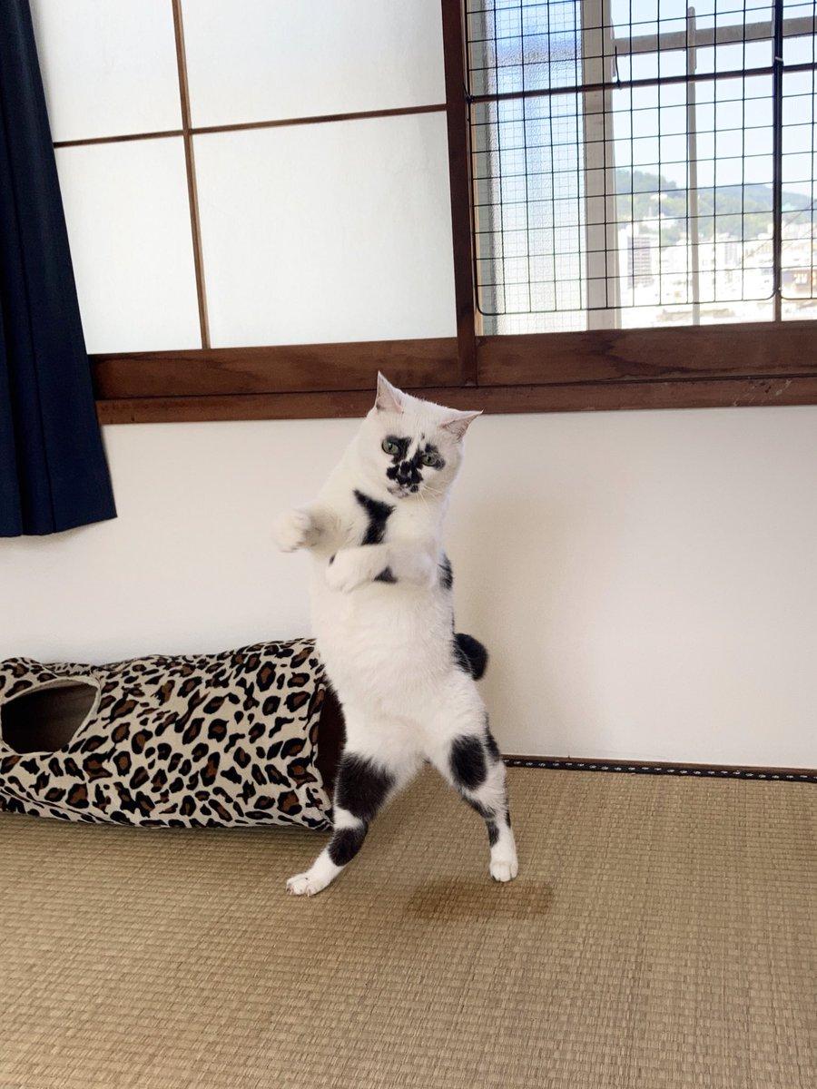 この写真すごく良く撮れたので何かに使いたいと思ったけど何に使えばいいのか全くわからないまま2週間経ってしまったので結局Twitterに置いておく#熱海 #BAR #猫 #Cat