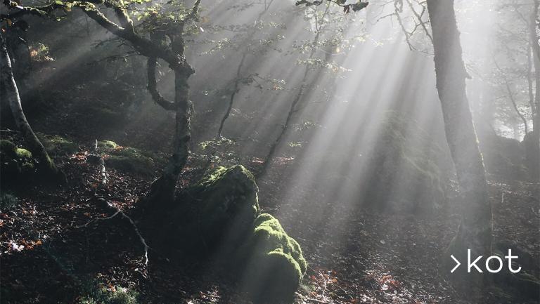 Ongi etorri udazkena!  https://t.co/i3e7wLmyYe  #kot #mendia #kotnatura #euskalherria  #naturelovers #landscape_lovers #mothernature #mountain #monte  #naturephotography #mountainphotography #slowlife #basquemountains #euskalherrikotxokoak #iratikobasoa #selvadeirati https://t.co/sGKvcU911M