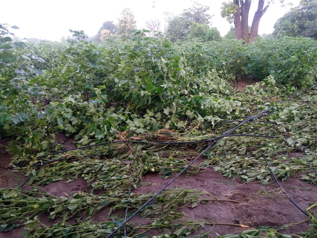 #NarendraModi #narendramodiji #maharashtragovt #jalna  Please help farmers https://t.co/b1co3mwGaW
