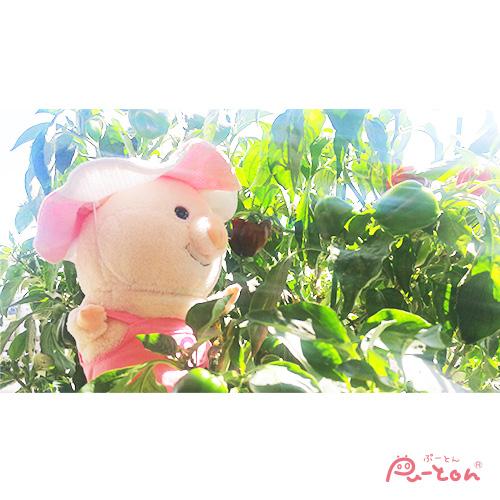 puuton_ndiの画像