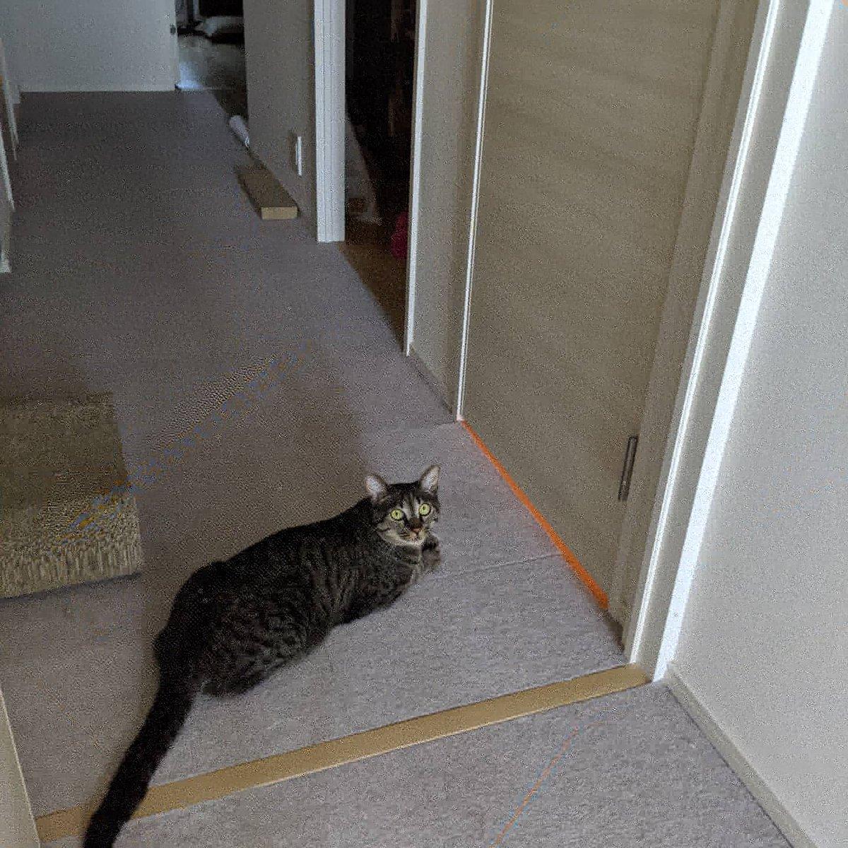 飼い主のトイレ出待ち🤣  #保護猫 #キジトラ #猫好きさんと繫がりたい #猫がいる生活 #ねこすたぐらむ #猫バカ #猫 #cat #ツナマヨ #出待ち https://t.co/gJAPT0HhUF