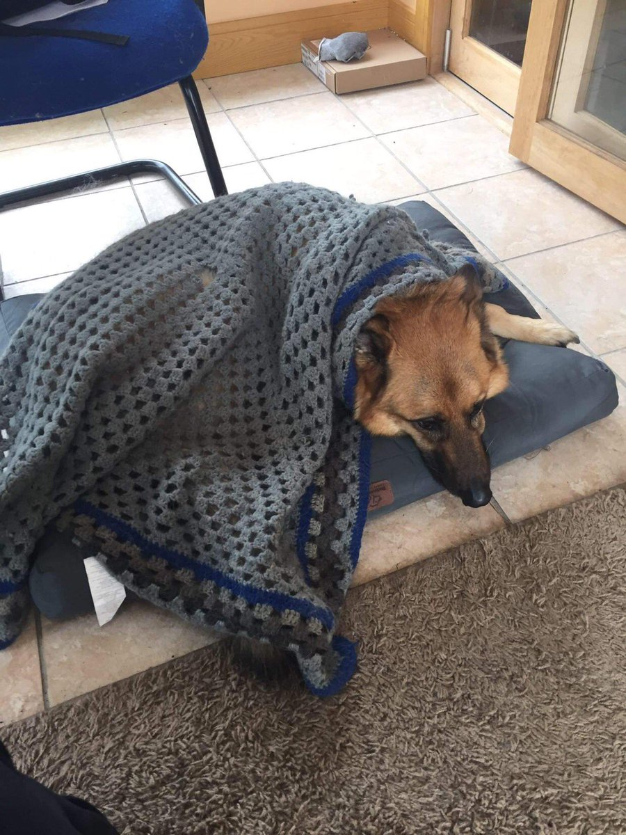 I need help!  My GSD is depressed.  When he's not walking in circles he's just flopped on his bed.   My eldest is gone abroad for a year and he's missing him.  What can I do! #gsd #pets #dogsoftwitter @brittasvet https://t.co/vKUlxnYYLy