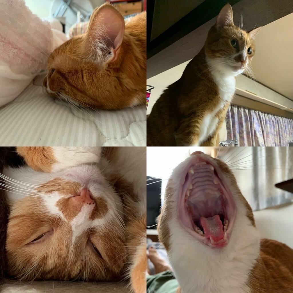 ふたば盛り😻🥰 #猫好きさんと繋がりたい #猫のいる生活 #猫 #ネコ #保護猫 #保護猫出身 #にゃんすたぐらむ #ねこ部 #愛知にゃんこ部 #cats #japanese_cats #そのこ #ふたば #レオ #ハチワレ #チャトラ #キジトラ #にゃんころさん https://t.co/RBuXBbG9uP https://t.co/5lnhnLwzxs