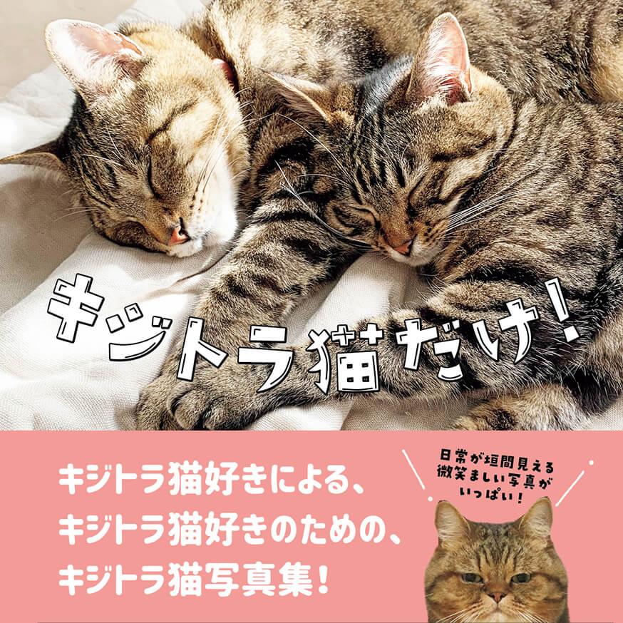 一冊まるごとキジトラ&キジシロ猫の #写真集 「キジトラ猫だけ!」が本日発売。めくってもめくってもキジトラ柄しか出てこない、マニアにはたまらないねこ写真集なのですニャ〜😻  #猫本 #キジトラ #キジシロ https://t.co/Mp8FPU22wl https://t.co/PnXUJ4B70D