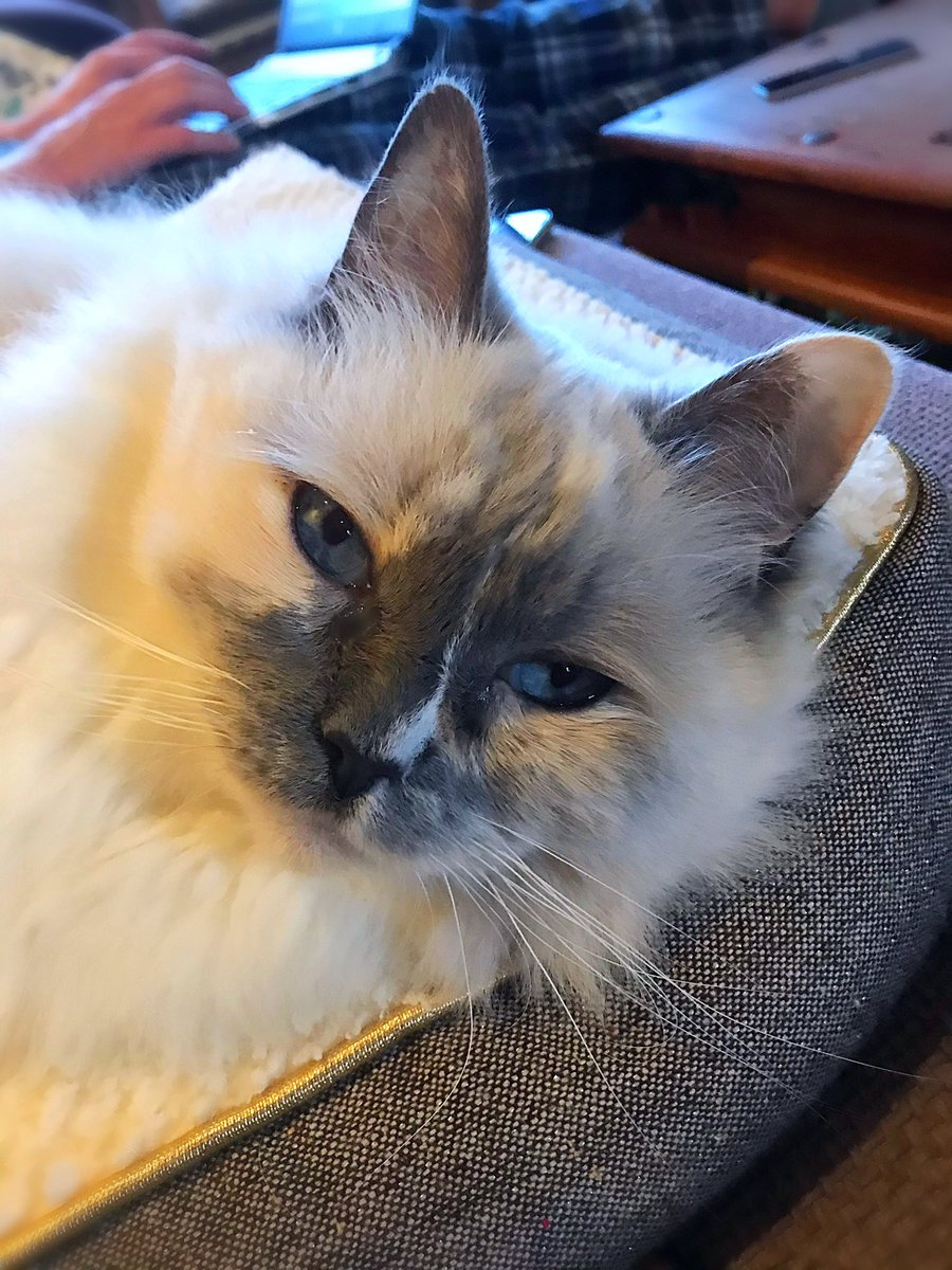 So the staff are working from home fur the foreseeable! What's efurrrybody complaining about?! #WhiskersWednesday 👑😻👑 #wednesdaywisdom #Lockdown2 https://t.co/OFyRQbmfyx