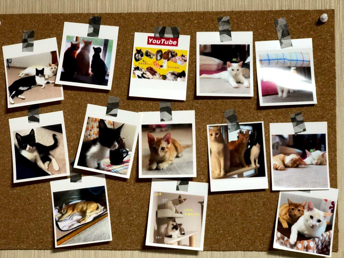 ピンは危ないからなるべく避けたい😢写真をマスキングテープで貼り付けてみた😊  #マスキングテープ #CanonSELPHYSQUAREQX10 #綺麗な写真 #写真シール #猫写真 #猫好き #猫多頭飼い #愛猫達の写真 https://t.co/6lqLyekKCj