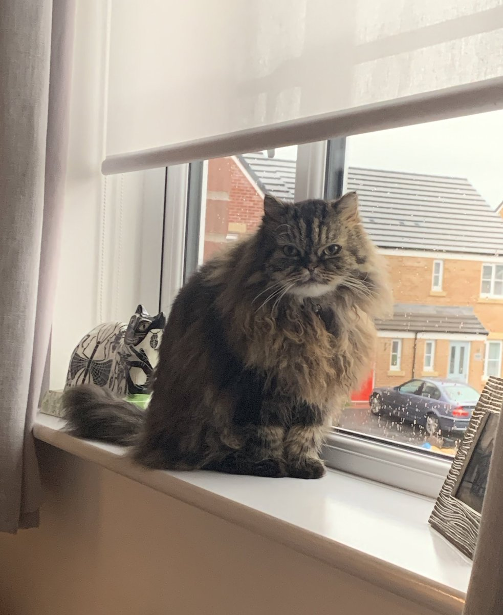 #whiskerswednesday 😻😻😻😻😻 We're trying to stay positive and I am good at cheering mum up! I'm the fluffy motivator!   @Cleo_sMommy @Tonithecat32 @nesjloch @Joeybird @BloomNight2 @GordonHarmony https://t.co/lIQ5y5ogDf