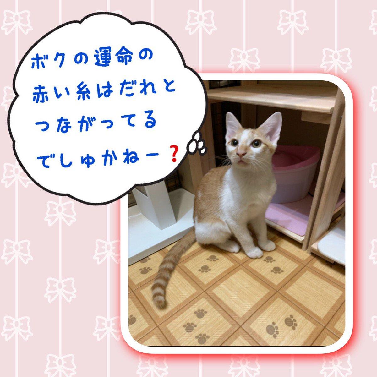 バンくん #里親様募集中  です‼️  会ってもらえたら連れて帰りたくなる可愛いさ💕 とっても甘えん坊ですよ❣️  #保護猫カフェ #保護猫を家族に #ずっとのおうち #猫 #ねこ #ねこ部 #にゃんすたぐらむ #にゃんこ #保護猫 #子猫 #保護猫と暮らす #猫好きさんと繋がりたい #保護猫を家族に迎えよう https://t.co/lZqnkDz55y