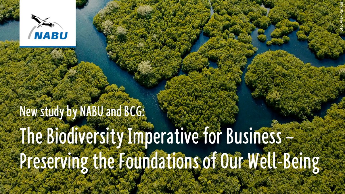 A new study by NABU and @BCG_Germany shows how economic activities fuel global #biodiversity loss. Businesses can make a difference if they integrate the protection of biodiversity into their decisions and processes! 🌱🪲🐦🐠. Foreword by @BirdLife_CEO: https://t.co/SIkDJJ7NE1 https://t.co/dVnIZfIKpw