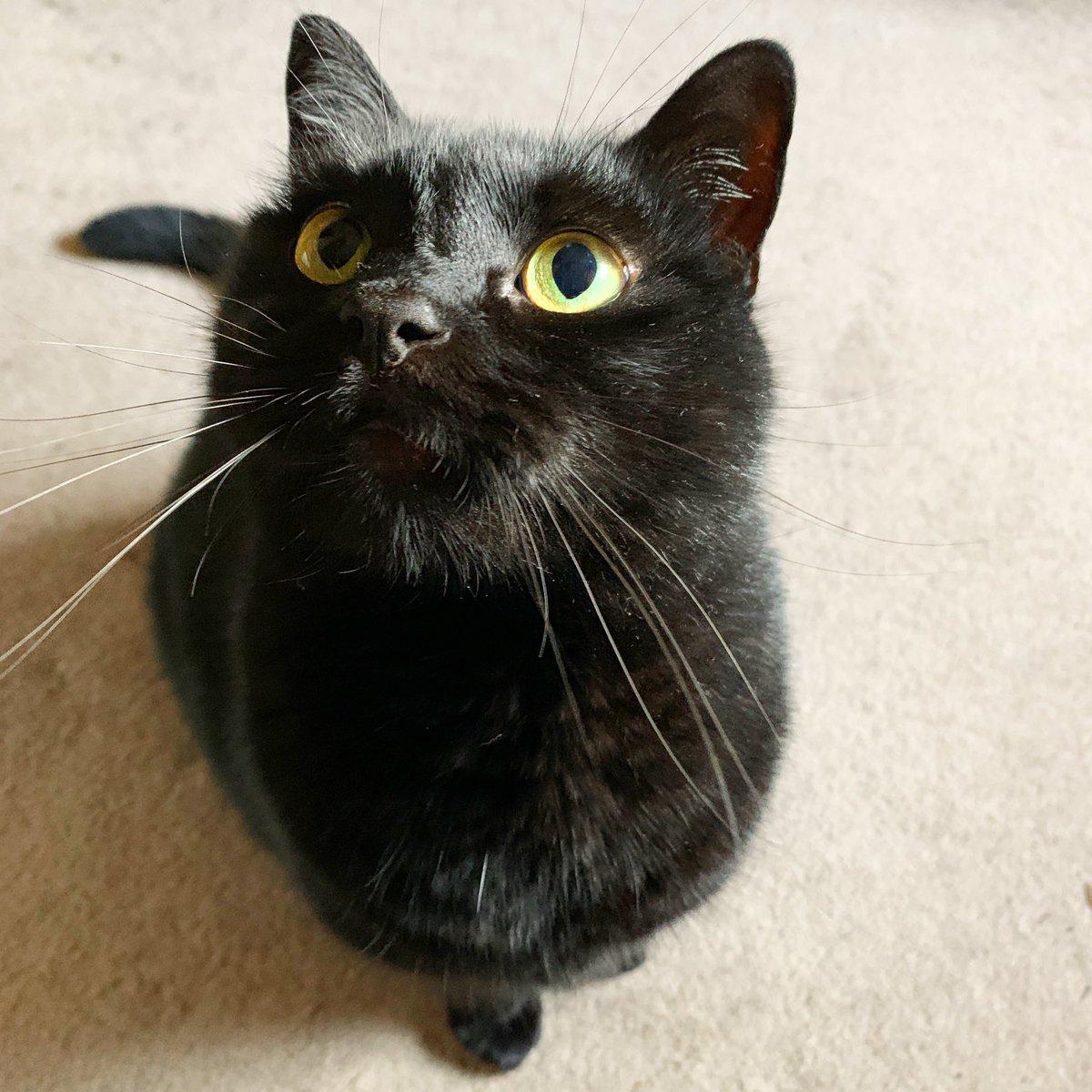 Morning cat and soundtrack.  -  #corkcity #kmru #blackcat #pluto https://t.co/WKbWM77Lyf
