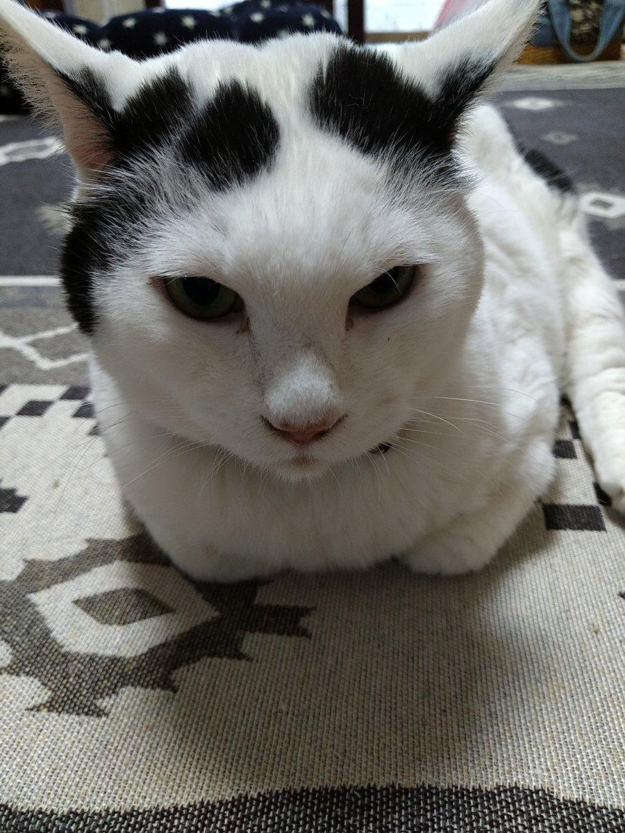 #おはぎ一家  🐾 9月22日はごまの家族記念日でした‼️ 🐾 まろの手術の日と重なってしまい 遅れてゴメンよww😅 🐾 これからも元気でね😘 🐾 #ごま #Goma  #ねこのきもち #sippoストーリー #ペコねこ部  #サンデイ #猫部 #ねこ部 #ネコ部 #猫 #ねこ #ネコ #cat https://t.co/pTudxPkaTT