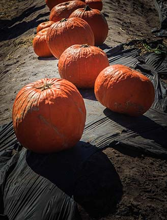 "TMesick Photography - The Photo Philosopher - New Blog Post: ""Fall Is Pumpkins In Summer""  Check It Out At: https://t.co/DcMM5bJuBk https://t.co/LkGkOJfveP"