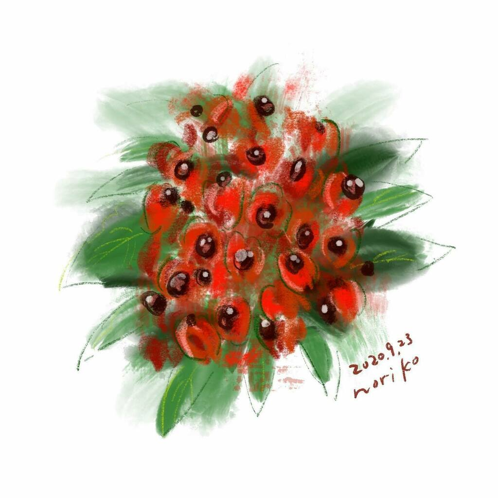 . Euscaphis japonica #ゴンズイ #ゴンズイの実  #樹木 #実 #木の実 #euscaphisjaponica  . . #akane_art #イラスト #illustration #20200923 #drawing #art #painting #procreate #一日一絵 #onesktchaday #onedrawingaday #365drawings https://t.co/8evwMAmJvO https://t.co/Ue5UCtOyWt