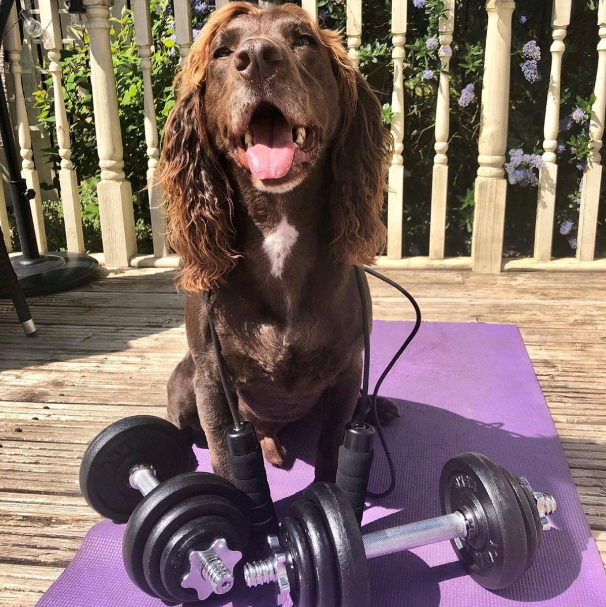 We all know how important (and super fun!) fitness is for us and our four-legged friends. Our buddies are embracing #NationalFitnessDay. We're not sure that's how you do the downward dog guys! 🤣 #BarkingHeads #HealthyDog #LoveDogs #DogsAreFamily #Fitness https://t.co/0CxxvHii2M