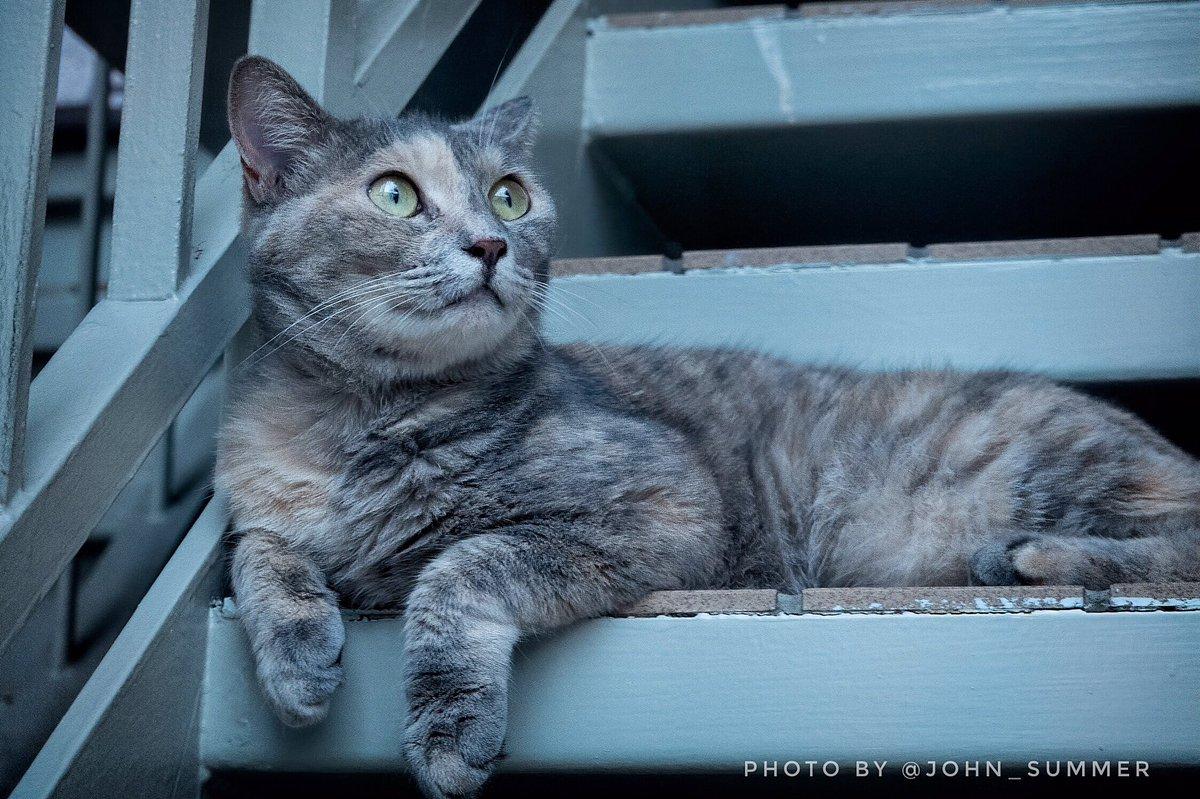 驚いたような猫 うちの近くで散歩した時にコンデジで撮った一枚 . 撮影日:2020.08.25 . A cat seeming surprised by something. . #写真好きな人と繋がりたい #写真撮ってる人と繋がりたい #カメラ好きな人と繋がりたい #ファインダー越しの私の世界 #東京 #野良猫 #野良猫部 #猫 #ねこ部 #cat #Tokyo https://t.co/353ezbT5LY